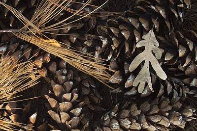 Pine Cones Wall Art - Photograph - Pine Cones And Maple Leaf by Andrew Soundarajan