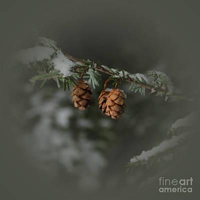 Photograph - Pine Cones by Debra Fedchin