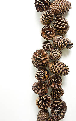 Boarder Photograph - Pine Cones by Edward Fielding