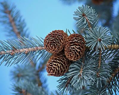 Pine Cones Photograph - Pine Cones by Ernie Echols