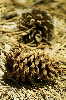 Pine Cones In The Valley-yosemite Series 30 Art Print by David Allen Pierson