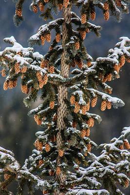 Photograph - Pine Cones by Karen Saunders