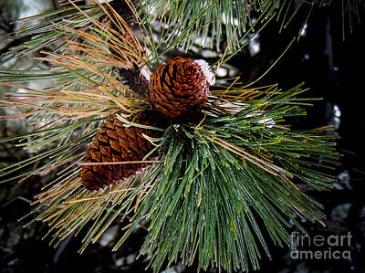 Photograph - Pine Cones by Mickey Clausen