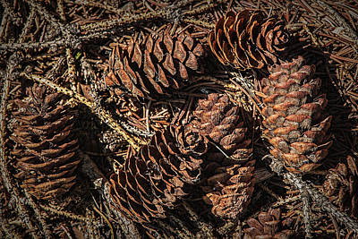 Photograph - Pine Cones On The Ground by Randall Nyhof
