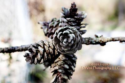 Pine Cones Original by Stephani JeauxDeVine