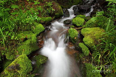 Photograph - Pine Creek H by Bill Singleton