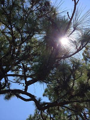 Pine Face With Sun Eye Art Print