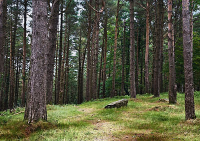 Photograph - Pine Forest - Killarney - Kerry - Ireland by Jane McIlroy