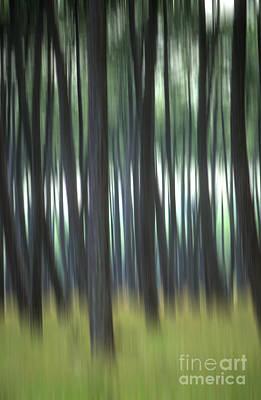 Out Of Focus Photograph - Pine Forest. Blurred by Bernard Jaubert