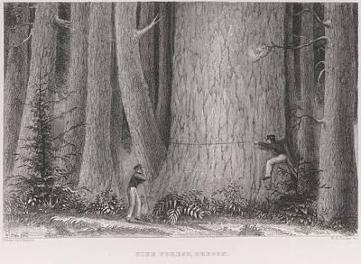 Tucker Photograph - Pine Forest by British Library