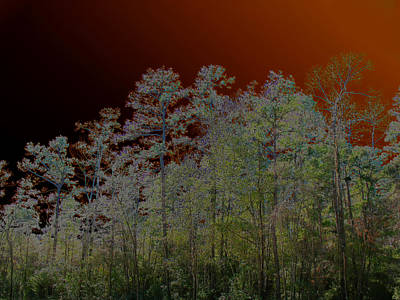 Photograph - Pine Forest by Connie Fox