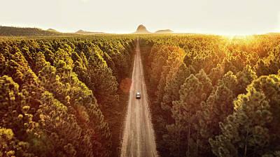 Pine Forest Art Print by Flyfilm.tv