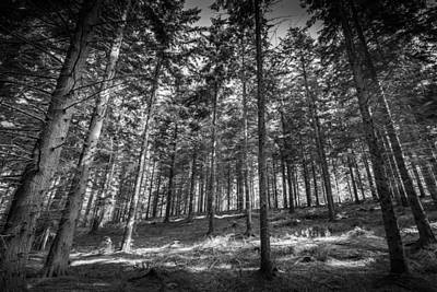 Art Print featuring the photograph Pine Forest by Gary Gillette