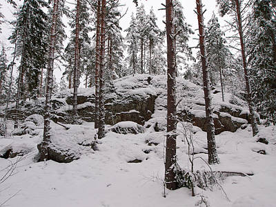 Photograph - Pine Forest Winter by Jouko Lehto