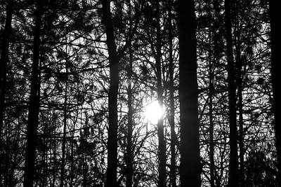 Photograph - Pine Grove I by Joe Faherty