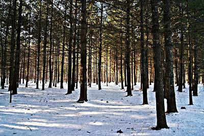 Photograph - Pine Grove Vi by Joe Faherty