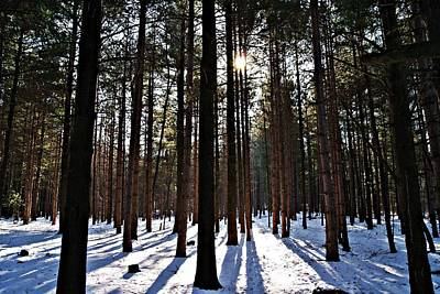 Photograph - Pine Grove Vii by Joe Faherty