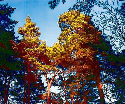pine  Leif Sohlman Art Print by Leif Sohlman