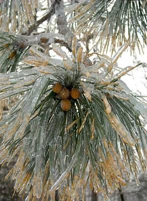 Photograph - Pine Needles In Ice by Ishana Ingerman