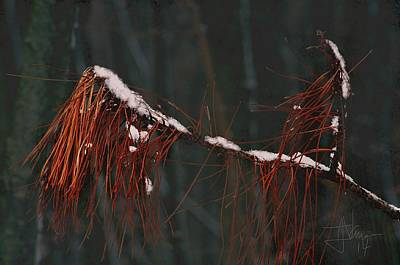 Photograph - Pine Needles by Jim Vance