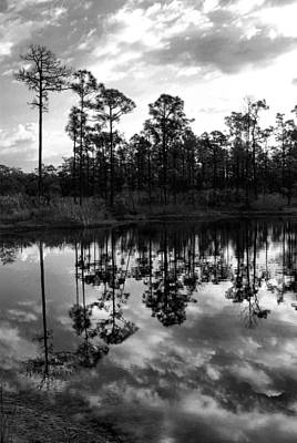 Trees Painting - Pine Pond Reflections by Sarah-jane Laubscher