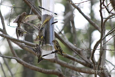 Photograph - Pine Siskins In Flight by Leone Lund