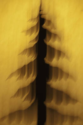 Photograph - Pine Tree Abstract 2 by Sherri Meyer