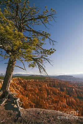 Photograph - Pine Tree And Bryce Canyon by Vishwanath Bhat