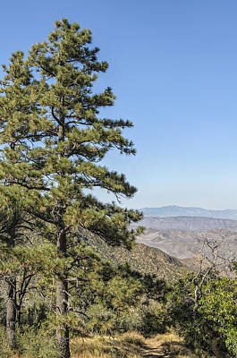 Photograph - Pine Tree And Laguna Mountains California by Marianne Campolongo
