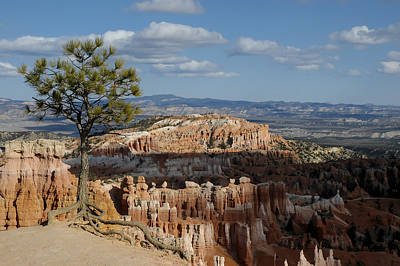 Photograph - Pine Tree Bryce Canyon by Lee Kirchhevel