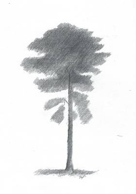 Pine Tree Drawing Number Four Art Print by Alan Daysh