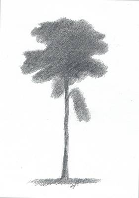 Pine Tree Drawing Number Three Art Print by Alan Daysh