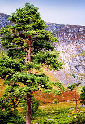 Pine Tree In Wicklow Hills. Ireland Art Print by Jenny Rainbow
