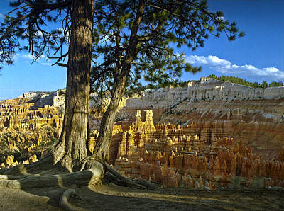 Pinnacle Overlook Photograph - Pine Tree On Ridge Overlooking Bryce Canyon by Randall Nyhof
