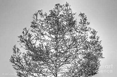 Photograph - Tree Silhouette In Pewter by D Wallace
