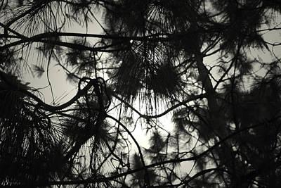 Pine Tree Art Print by Sumit Mehndiratta