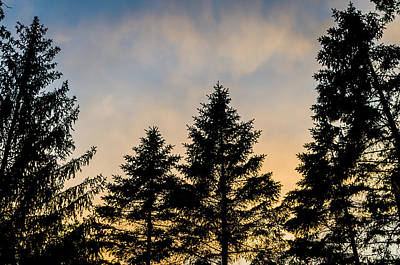 Photograph - Pine Tree Sunset by Anthony Doudt
