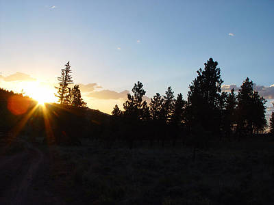 Photograph - Pine Tree Sunset by Mark Russell