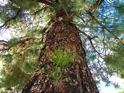 Photograph - Pine Tree Tower by Diane Lynn Hix