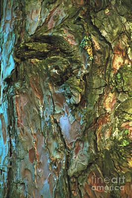 Photograph - Pine Tree by William Norton