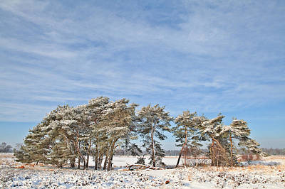 Pine Trees At Edge Of Frozen Lake Print by Dirk Ercken