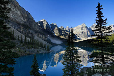 Scenic Photograph - Pine Trees At Moraine Lake by Oscar Gutierrez