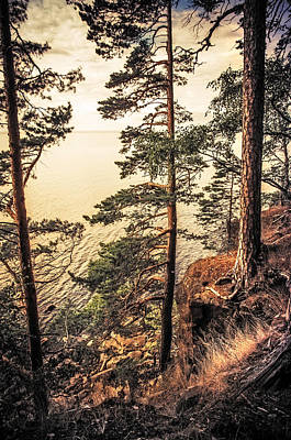 Pine Trees Of Holy Island Art Print by Jenny Rainbow