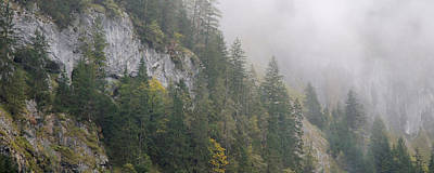 Lauterbrunnen Wall Art - Photograph - Pine Trees On A Hill, Lauterbrunnen by Panoramic Images