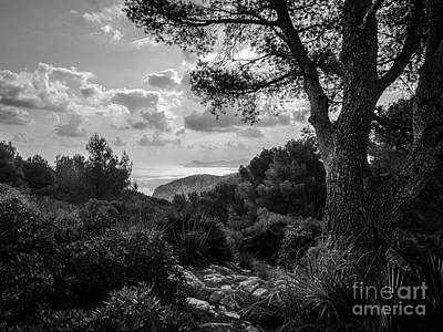 Photograph - Pine With Ocean View by Alexander Kunz