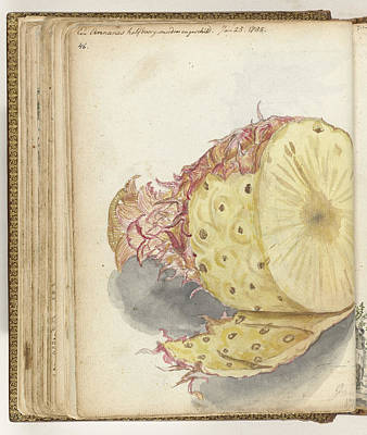 Pineapple Drawing - Pineapple, Jan Brandes by Quint Lox