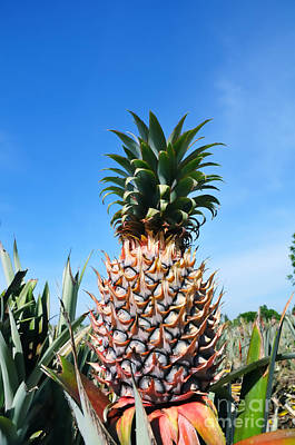 Photograph - Pineapple by William Voon