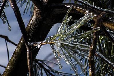 Photograph - Pineburst by Dawn Hagar