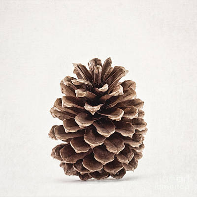 Autumn Photograph - Pinecone Pose 2 by Alison Sherrow