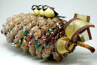 Photograph - Pinecone Trio by Vinnie Oakes